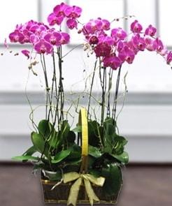 7 dallı mor lila orkide  Düzce internetten çiçek siparişi