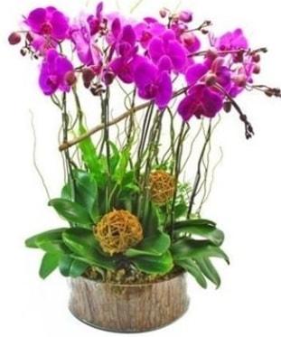 Ahşap kütükte lila mor orkide 8 li  Düzce çiçek servisi , çiçekçi adresleri