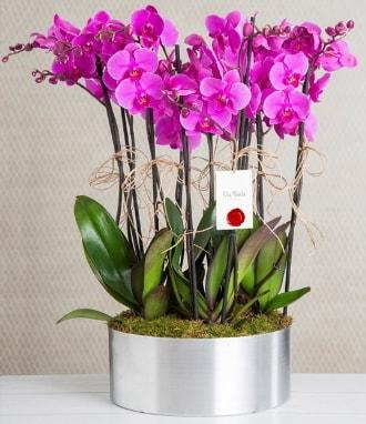 11 dallı mor orkide metal vazoda  Düzce internetten çiçek siparişi