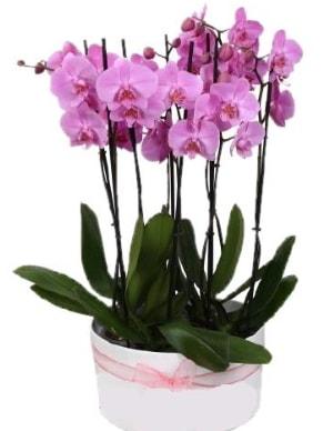 Beyaz seramik içerisinde 7 dallı mor orkide  Düzce cicek , cicekci