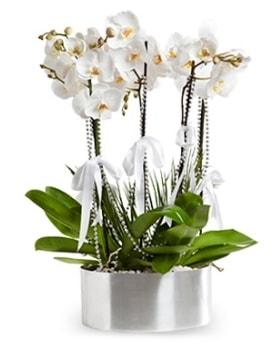 Beş dallı metal saksıda beyaz orkide  Düzce çiçek siparişi vermek