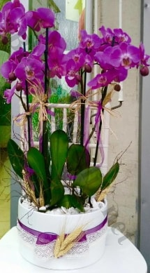 Seramik vazoda 4 dallı mor lila orkide  Düzce yurtiçi ve yurtdışı çiçek siparişi