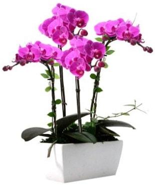 Seramik vazo içerisinde 4 dallı mor orkide  Düzce cicekciler , cicek siparisi