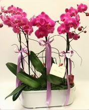 Beyaz seramik içerisinde 4 dallı orkide  Düzce 14 şubat sevgililer günü çiçek
