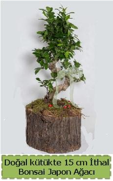 Doğal kütükte İthal bonsai japon ağacı  Düzce online çiçek gönderme sipariş