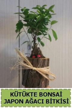 Kütük içerisinde doğal bonsai ağacı  Düzce cicek , cicekci
