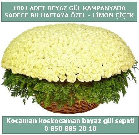 1001 adet beyaz gül sepeti özel kampanyada  Düzce internetten çiçek siparişi