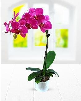 Tek dallı mor orkide  Düzce cicekciler , cicek siparisi