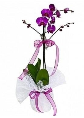 Tekli Mor Orkide  Düzce çiçek siparişi vermek