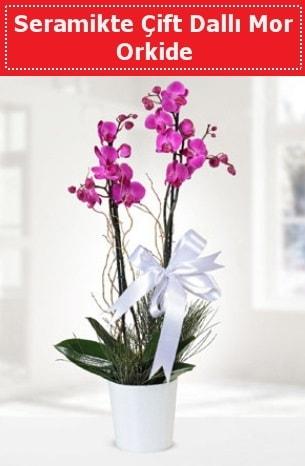 Seramikte Çift Dallı Mor Orkide  Düzce çiçek yolla