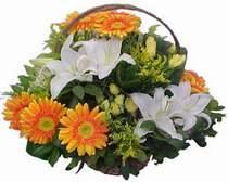 Düzce çiçek siparişi sitesi  sepet modeli Gerbera kazablanka sepet